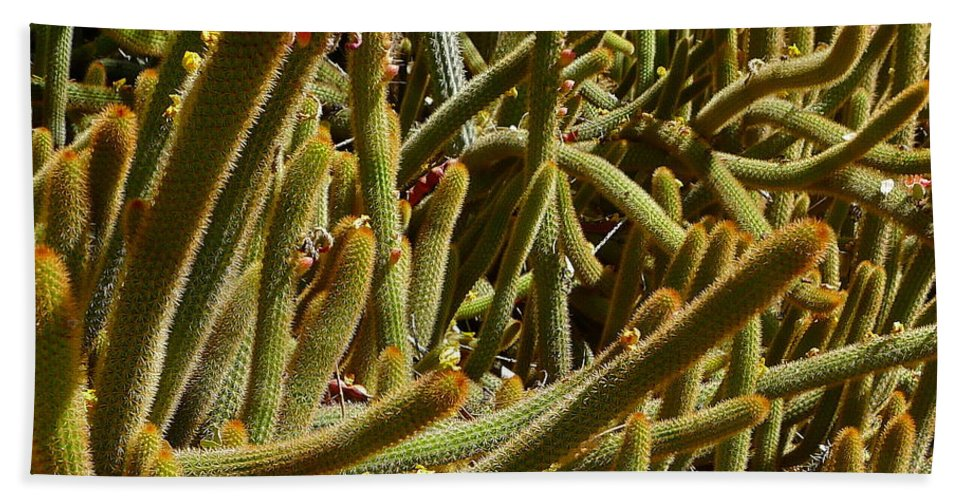 Cactus Bath Sheet featuring the photograph Cactus Cactus by Denise Mazzocco