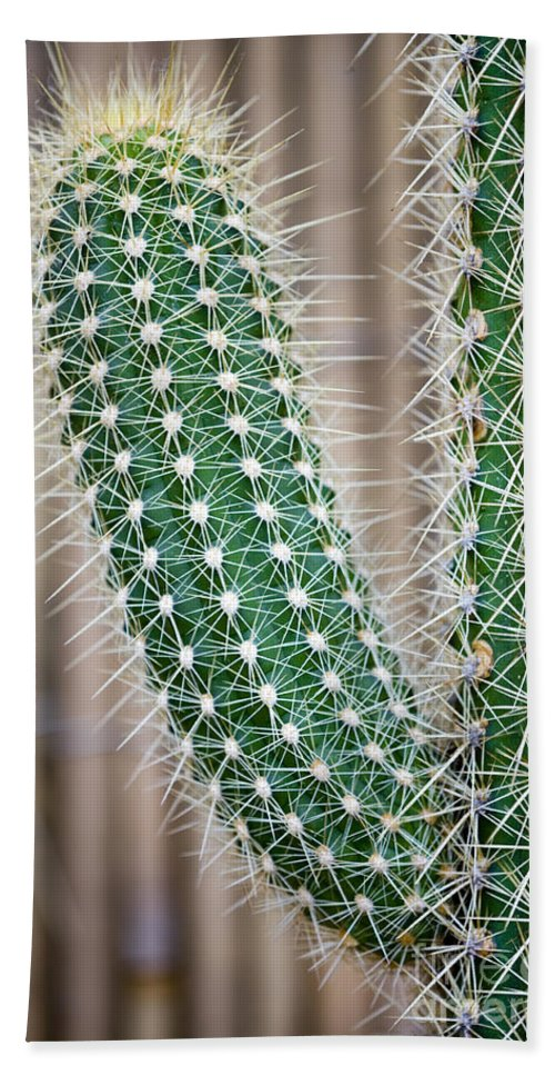 Background Hand Towel featuring the photograph Cactus by Lee Avison