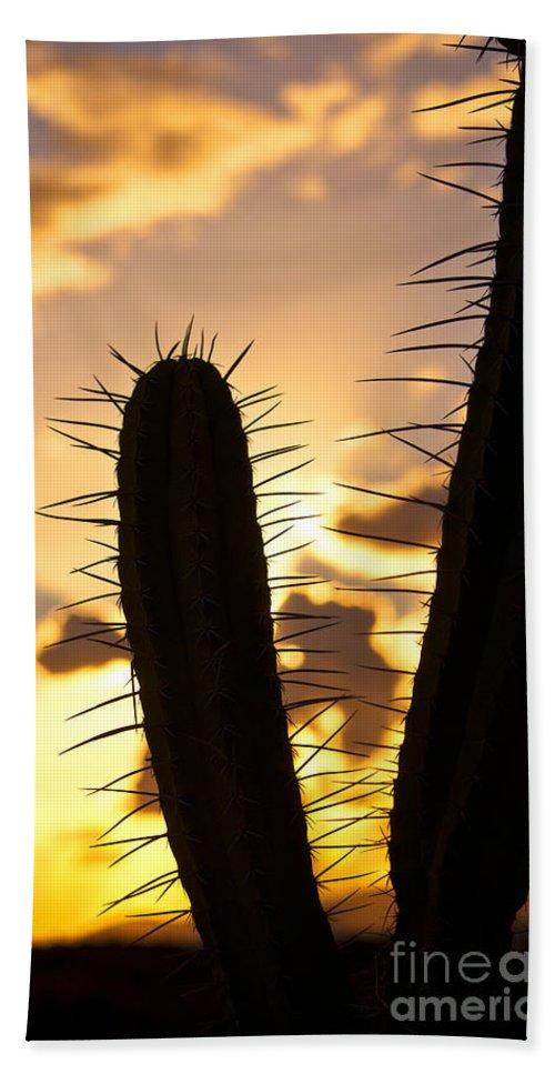Cactus Bath Sheet featuring the photograph Cactus Sunset by James Lavott