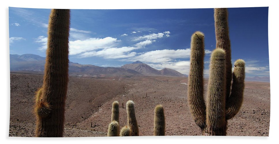Altiplano Bath Sheet featuring the photograph Cactus With The Andes Mountains by Christian Heeb