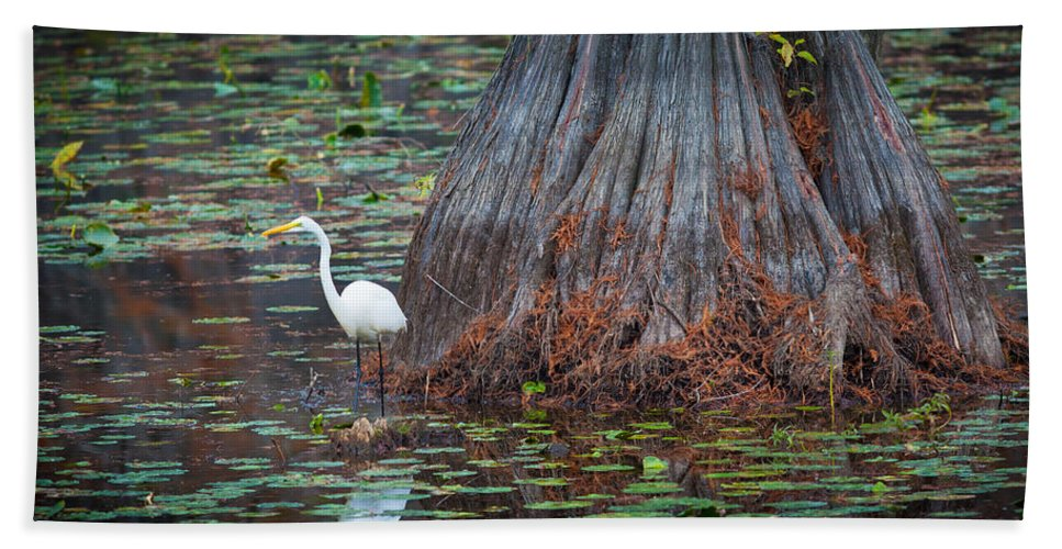 America Hand Towel featuring the photograph Caddo Lake Egret by Inge Johnsson