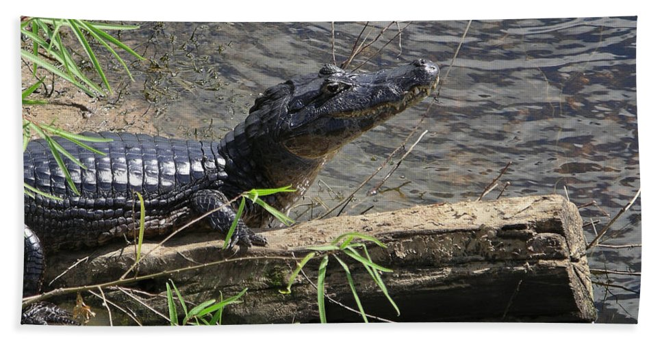 Animals Bath Sheet featuring the digital art Caiman by Carol Ailles