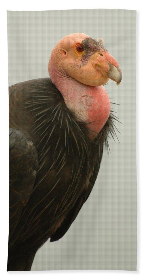 Big Sur Bath Sheet featuring the photograph California Condor Big Sur by Jeff Black
