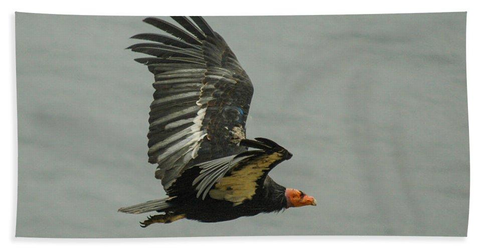 Big Sur Bath Sheet featuring the photograph California Condor At Big Sur by Jeff Black