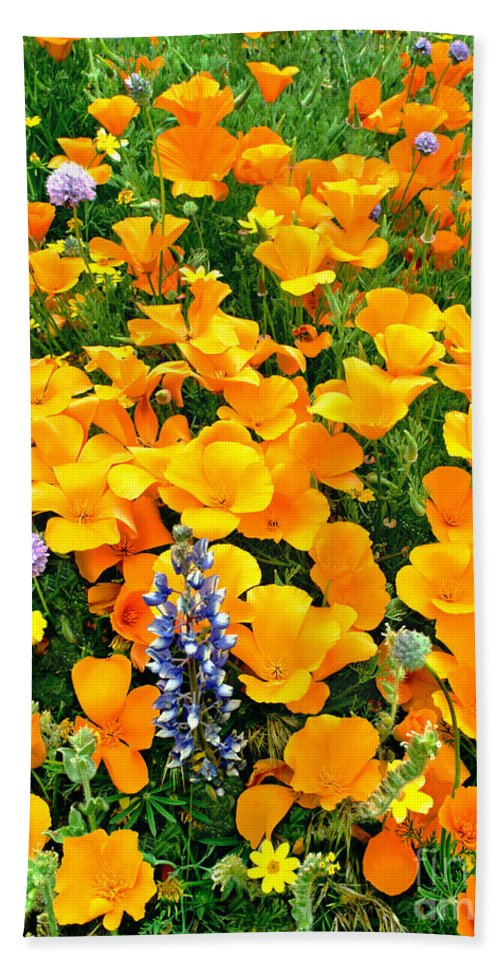 North America Hand Towel featuring the photograph California Poppies And Betham Lupines Southern California by Dave Welling
