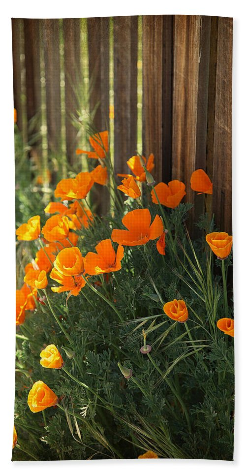 Sierra Nevada Bath Sheet featuring the photograph California Poppies by Portraits By NC