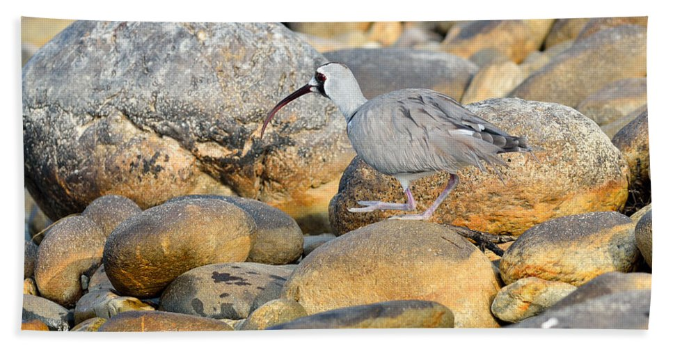 Nature Hand Towel featuring the photograph Camouflage by Fotosas Photography