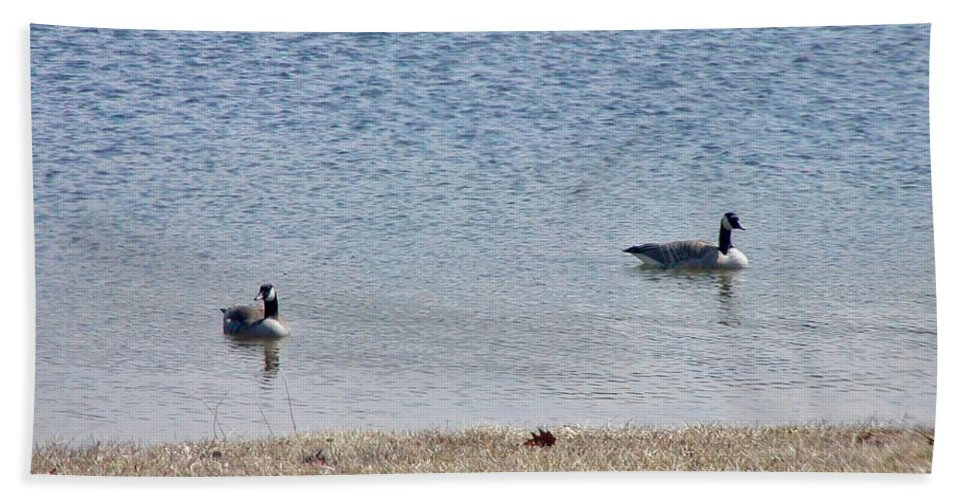 Fowl Bath Sheet featuring the photograph Canadian Geese by Scenic Sights By Tara
