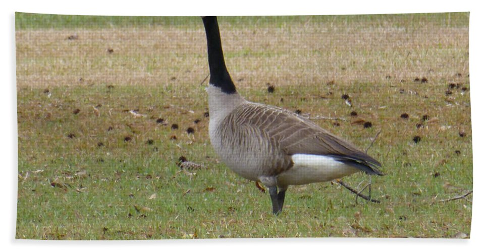 Tree Hand Towel featuring the photograph Canadian Goose Strut by Joseph Baril