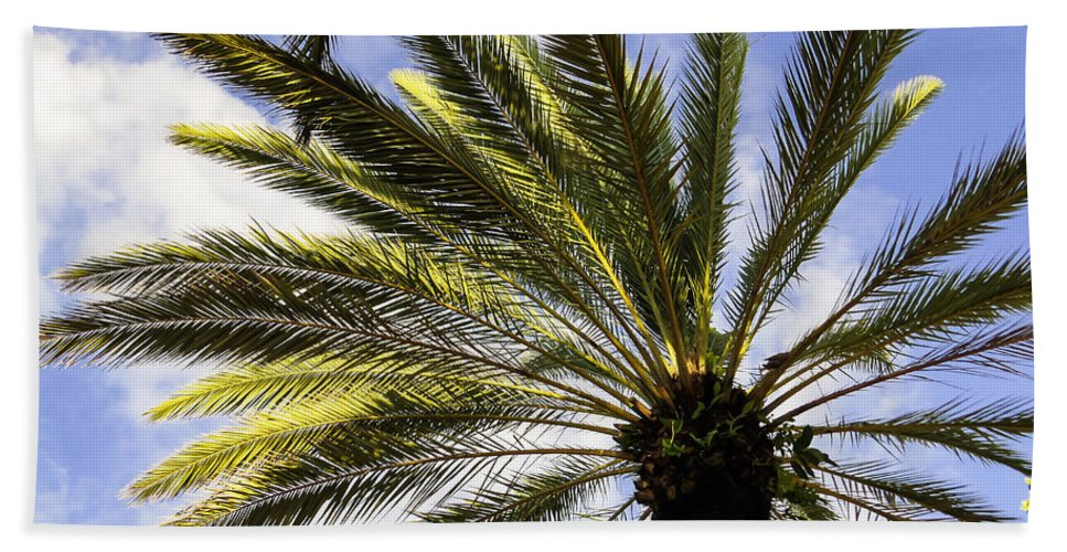 Canary Island Date Palm Hand Towel featuring the photograph Canary Island Date Palm by Zina Stromberg