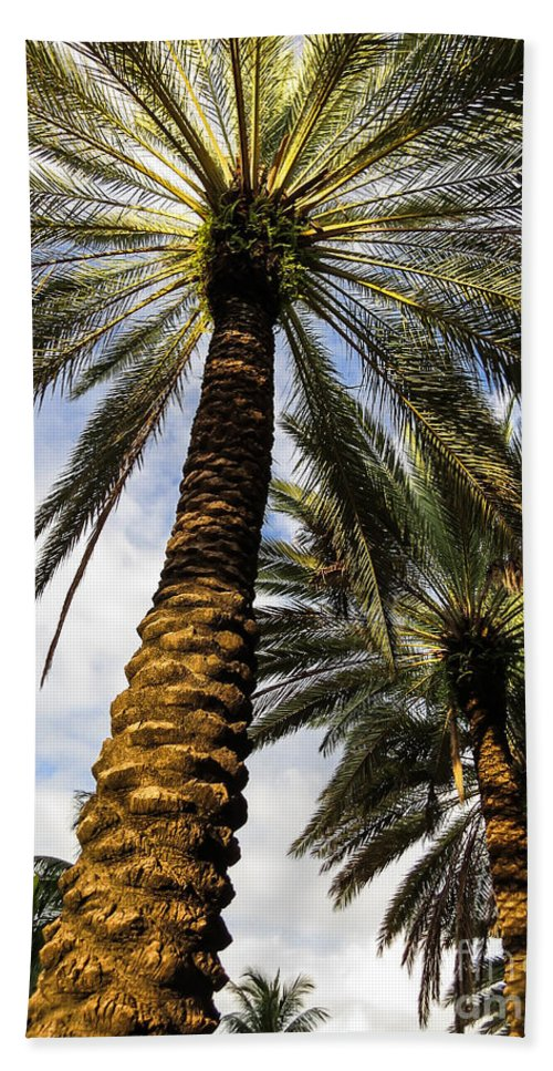 Palm Hand Towel featuring the photograph Canary Island Date Palms by Zina Stromberg