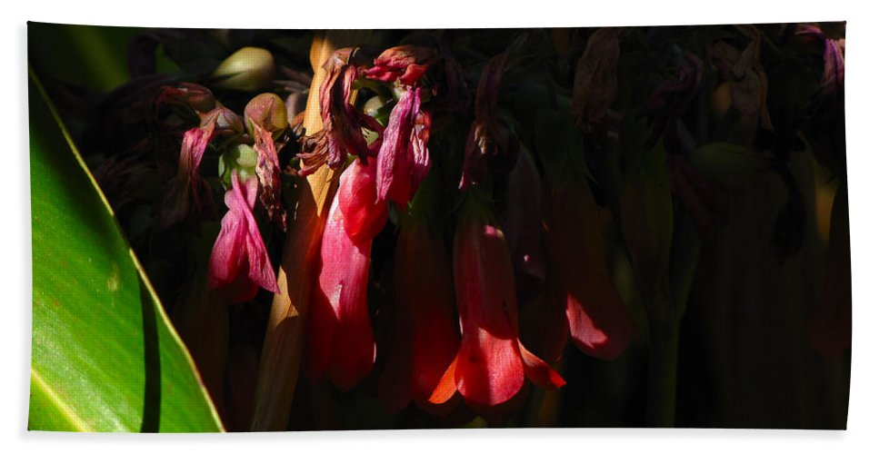 Phil Hand Towel featuring the photograph Candelabra Flower by Phil Penne