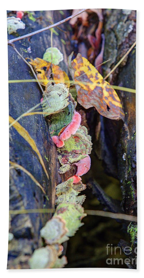 Trees Bath Sheet featuring the photograph Candied Fungus by Alan Look