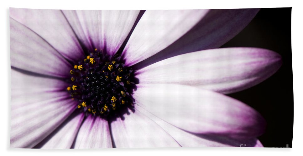 Osteospermum Hand Towel featuring the photograph Cannington Roy by Anne Gilbert
