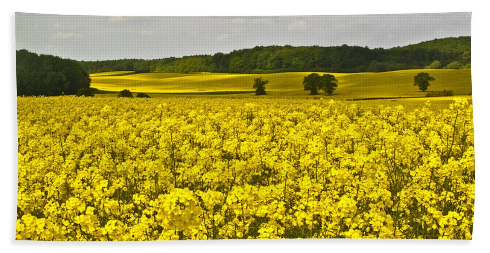 Spring Hand Towel featuring the photograph Canola Field by Heiko Koehrer-Wagner