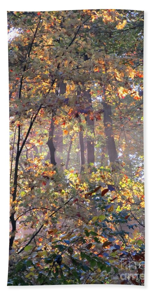 Forest Light Images Woodland Landscapes Forest Photography Images Misty Light Forest Glow Forest Sunrise Misty Morning Forest Canopy Collage Seasonal Forest Prints Nature Prints Nature Photography Autumn Leaves Golden Leaves Arborial Illumination Naturalist Natural Science Scenery Natural Light Forest Fog Fall Forest Indian Summer Prints Maryland Forest Outdoors Maryland Outdoor Recreation Environmental Education Oldgrowth Forest Biodiversity Preservation Wildlife Habitat Conservation Natural Hand Towel featuring the photograph Canopy Collage by Joshua Bales