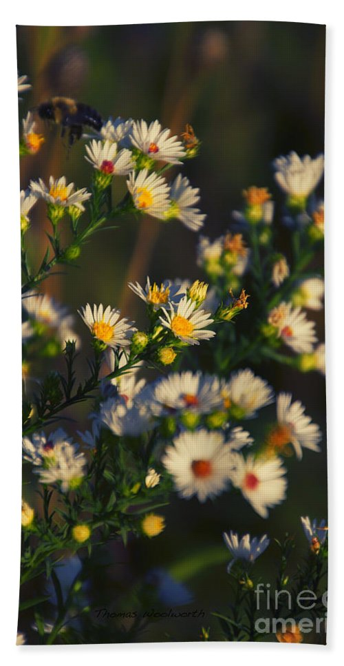 Daisy Bath Sheet featuring the photograph Can't Get Enough Of Your Love by Thomas Woolworth