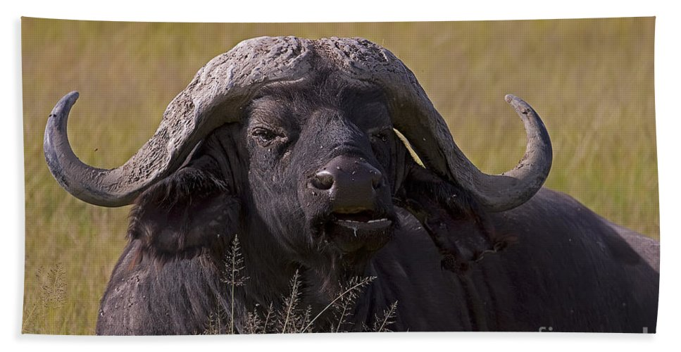 Syncercus Caffer Bath Sheet featuring the photograph Cape Buffalo  #0574 by J L Woody Wooden
