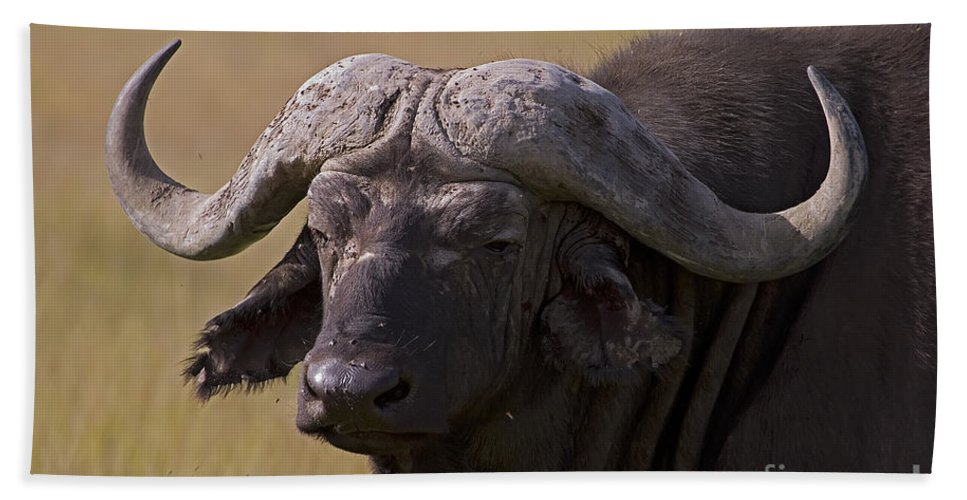 Syncercus Caffer Bath Sheet featuring the photograph Cape Buffalo  #0607 by J L Woody Wooden