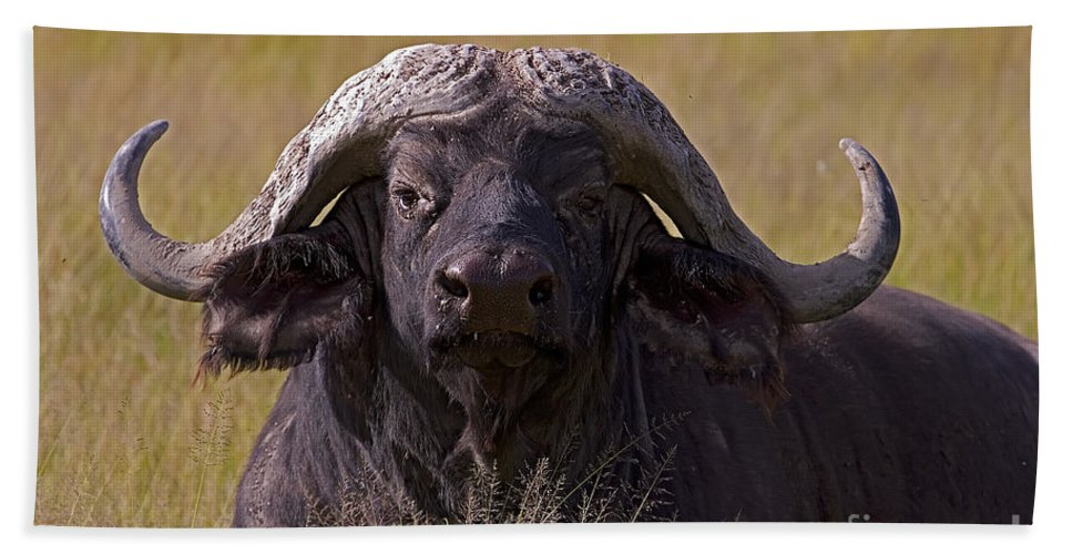 Syncercus Caffer Bath Sheet featuring the photograph Cape Buffalo  #0609 by J L Woody Wooden