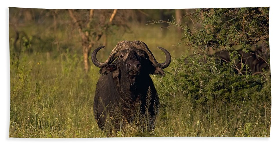 Syncercus Caffer Bath Sheet featuring the photograph Cape Buffalo  #6851 by J L Woody Wooden