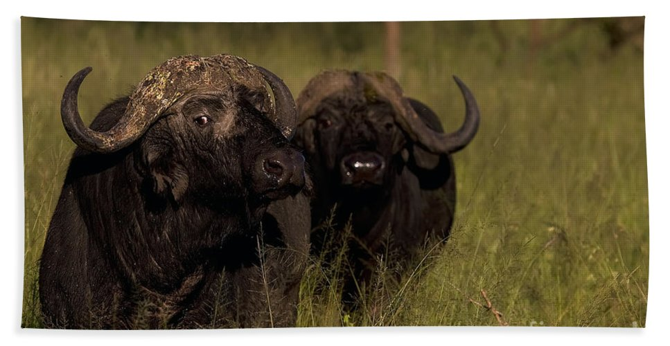 Syncercus Caffer Bath Sheet featuring the photograph Cape Buffalo  #6884 by J L Woody Wooden