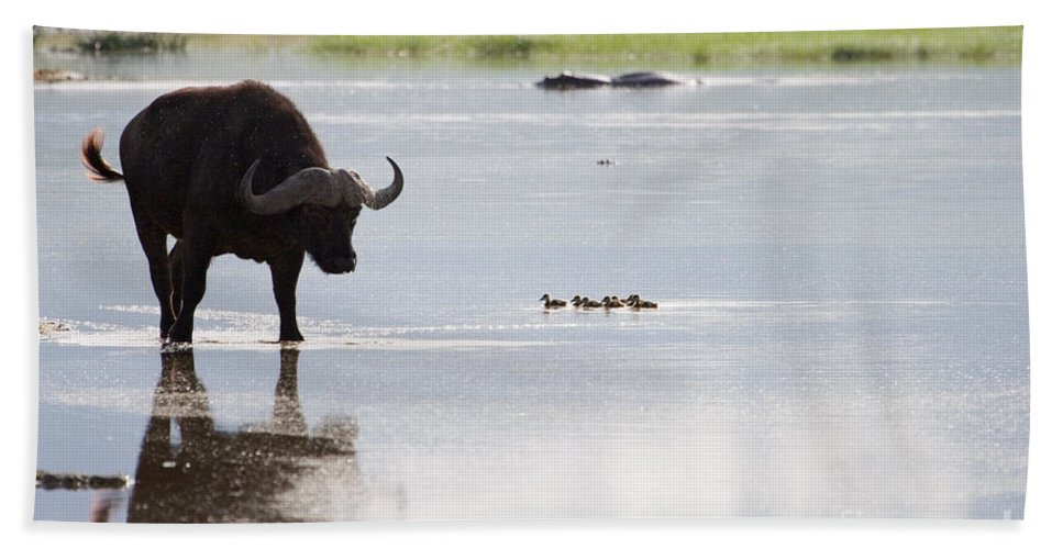 Cape Buffalo Bath Sheet featuring the photograph Cape Buffalo And Baby Eygptian Geese  #0375 by J L Woody Wooden