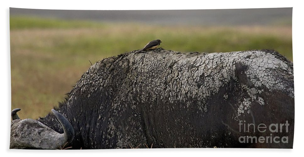 Syncercus Caffer Bath Sheet featuring the photograph Cape Buffalo And Bird  #9873 by J L Woody Wooden