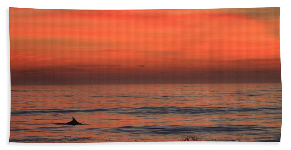 Cape Hatteras Hand Towel featuring the photograph Cape Hatteras Dolphin 2 by Mountains to the Sea Photo