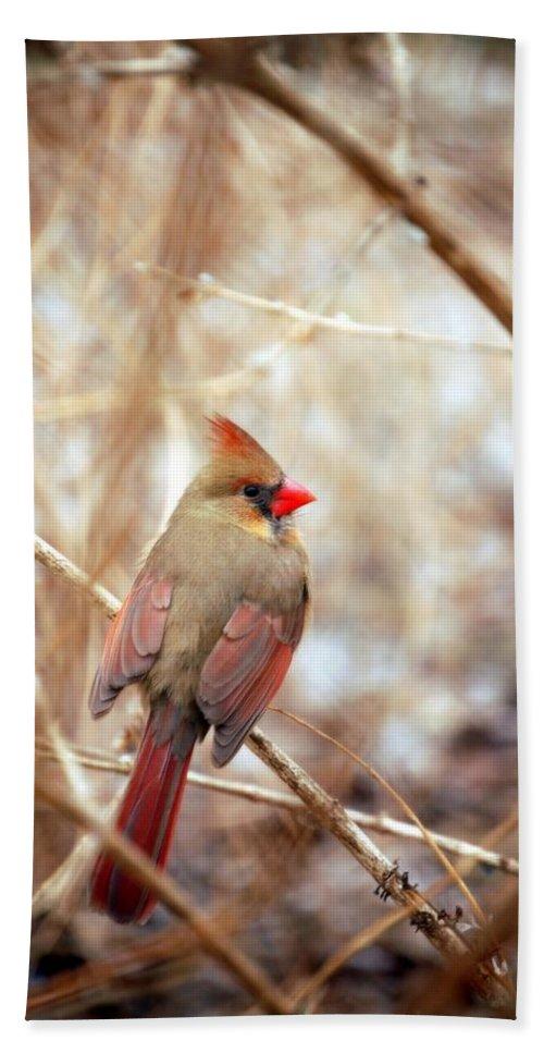 Cardinal Birds Hand Towel featuring the photograph Cardinal Birds Female by Peggy Franz