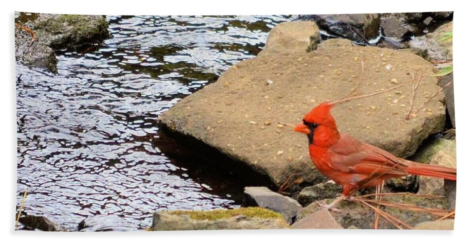 Cardinal By The Creek Hand Towel featuring the photograph Cardinal By The Creek by Maria Urso