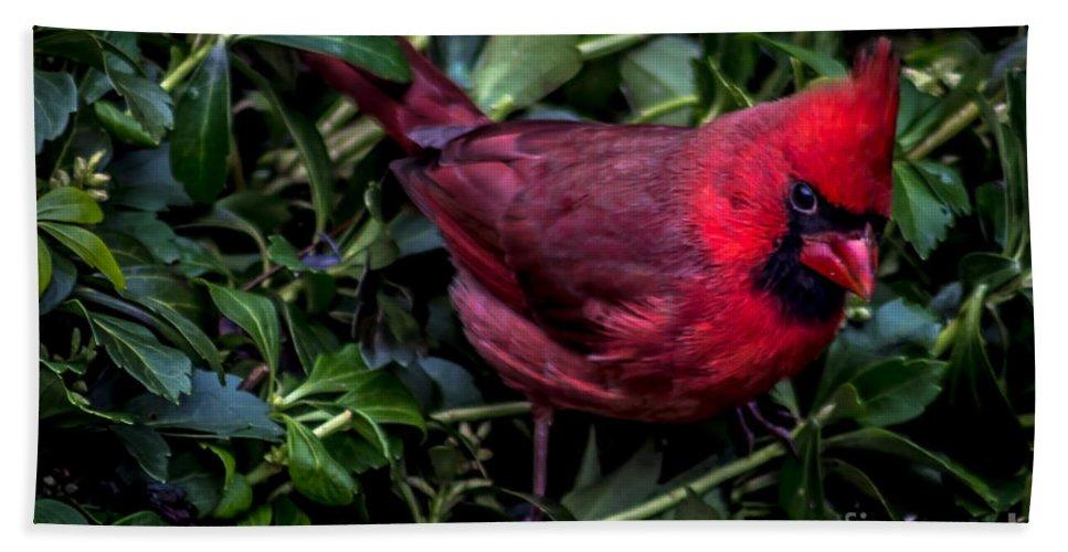 Cardinal. Bird Bath Sheet featuring the photograph Cardinal by David Rucker