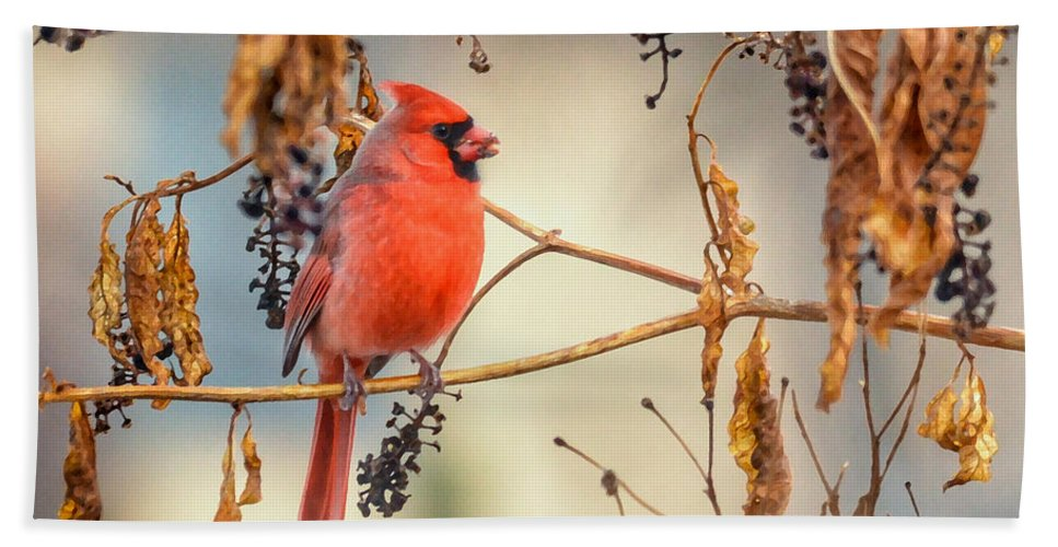 Male Cardinal Bath Sheet featuring the photograph Cardinal In The Pokeberries by Kerri Farley