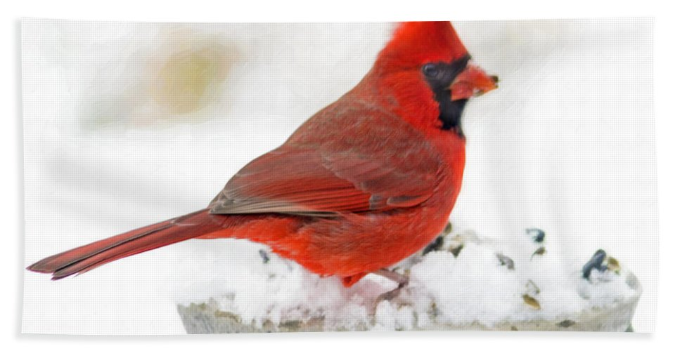 Cardinal Bath Sheet featuring the photograph Cardinal In Winter by Hal Halli