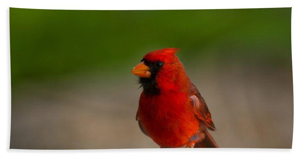 Cardinalis Cardinalis Hand Towel featuring the photograph Cardinal Red by Mike Dawson