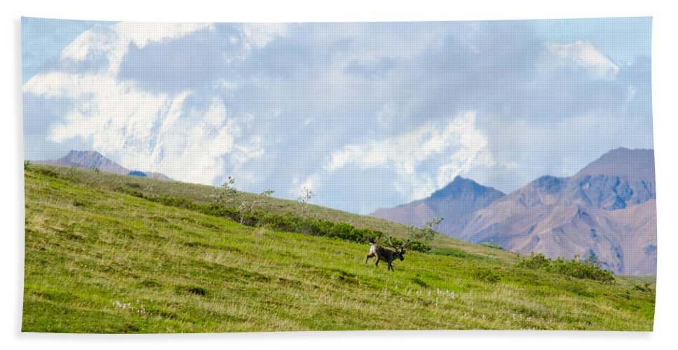 Alaska Hand Towel featuring the photograph Caribou And Mount Mckinley by Gregory Everts