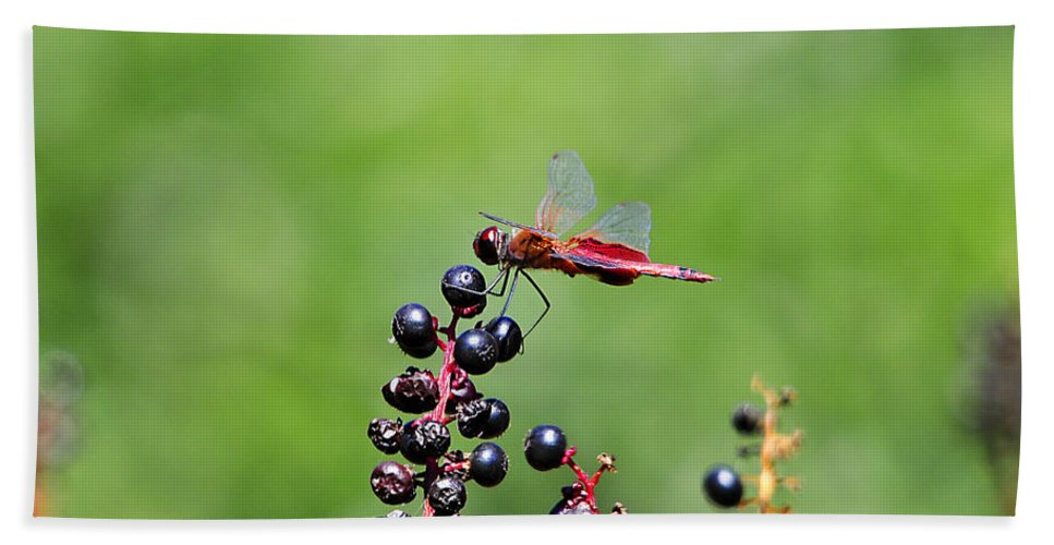 Dragonfly Hand Towel featuring the photograph Carolina Saddlebags by Al Powell Photography USA