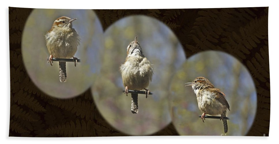 Carolina Wren Hand Towel featuring the photograph Carolina Wren - Thryothorus Ludovicianus by Mother Nature