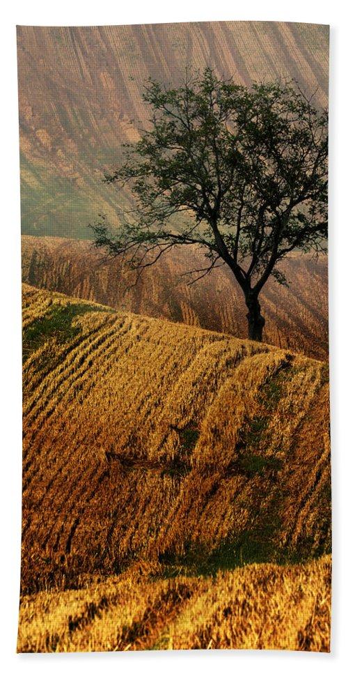 Landscape Hand Towel featuring the photograph Carpet Fields Of Moravia by Jaroslaw Blaminsky