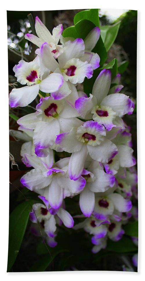 Orchid Hand Towel featuring the photograph Cascade Of Orchids In White And Purple by Dora Sofia Caputo Photographic Design and Fine Art