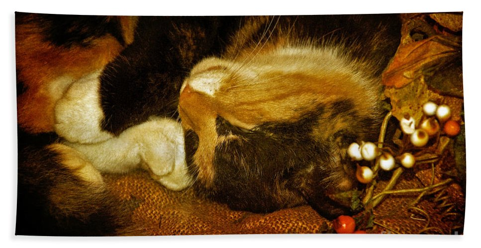 Cat Hand Towel featuring the photograph Cat Catnapping by Lois Bryan