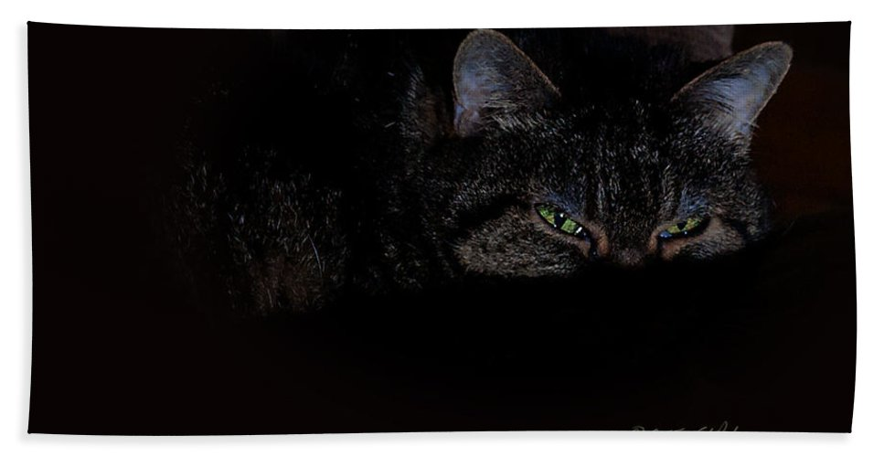 Cat Bath Sheet featuring the photograph Cat Eyes by Edward Peterson