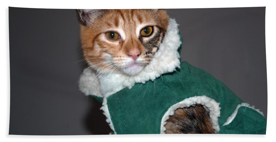 Cat Bath Sheet featuring the photograph Cat In Patrick's Coat by Tikvah's Hope
