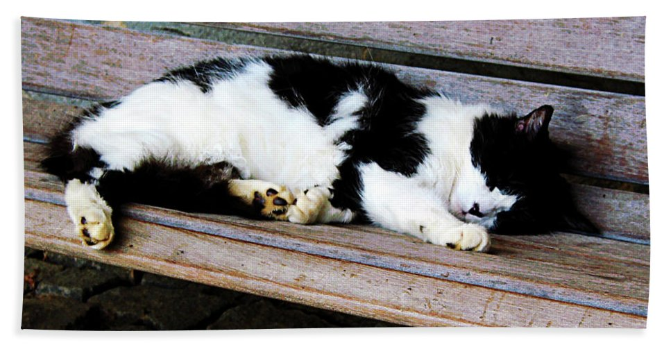 Cat Hand Towel featuring the photograph Cat Sleeping On Bench by Susan Savad