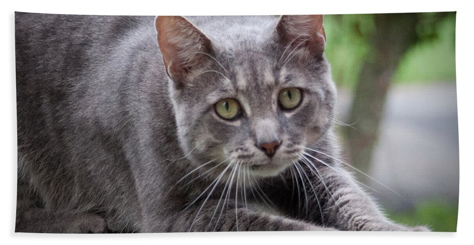 Cat Bath Sheet featuring the photograph Cat Stretch by Photos By Cassandra