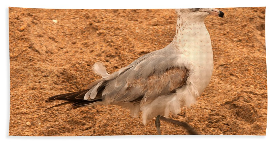 seagull Bath Sheet featuring the photograph Catching A Tail Wind by Paul Mangold