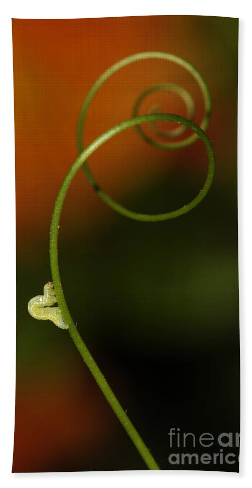 Macrophotography Hand Towel featuring the photograph Caterpillar And Curly Branch by Jaroslaw Blaminsky