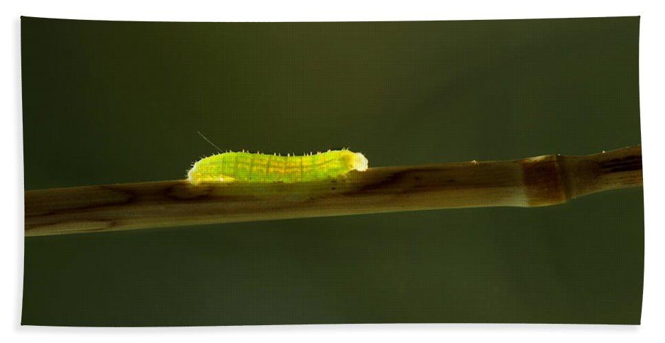 Flora Hand Towel featuring the photograph Caterpillar by Heike Hultsch