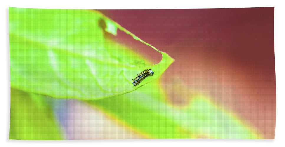 Butterfly Bath Sheet featuring the photograph Caterpillar by Pablo Rosales