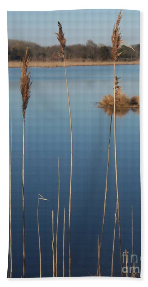 Cattails Hand Towel featuring the photograph Cattails Cape May Point Nj by Eric Schiabor